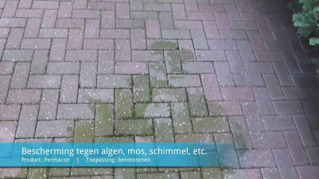 Mos Verwijderen Tegels : Permacon beton stenen beschermen tegen algen mos schimmels