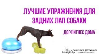 Урок 3. Лучшие упражнения для задних лап собаки. Дог фитнес дома