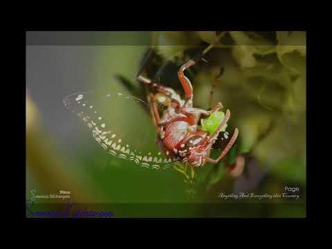 Beautiful pictures EP4/ภาพสวยๆแนว Close up/Nikon D-5600