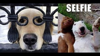 ? Funniest ? Dogs and ? Cats - Awesome Funny Pet Animals Videos ?#animals doing things