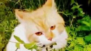 Хорошая Трава У Кота замедленная съёмка