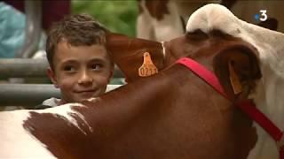 Un éleveur accusé de maltraitance sur une vache montbéliarde à la Foire Comtoise de Besançon