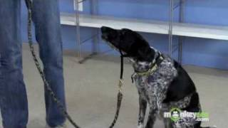 Dog Leash Training - The Right Leash Equipment