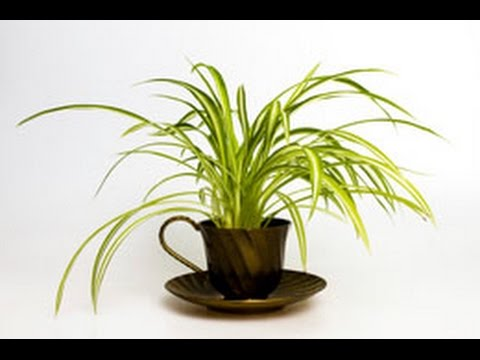 laymans guide to houseplant identification - House Plant Identification Guide By Picture
