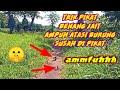 Trik Ampuh Pikat Burung Prenjak Dari Benang Jait  Mp3 - Mp4 Download