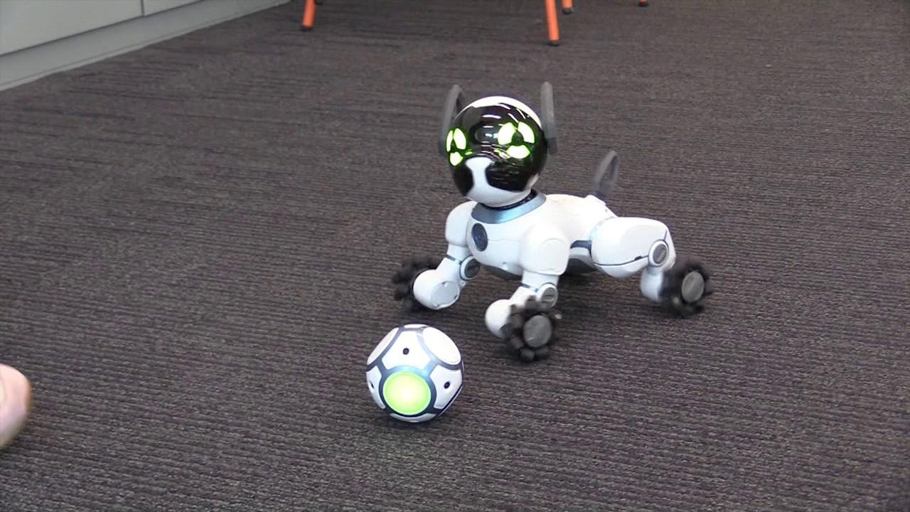 Le Testé Robot On Chien A Aq5RLj34
