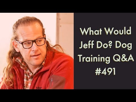 Feeding dogs in Crates | Stop a jumping dog | What Would Jeff Do? Dog Training Q & A #491