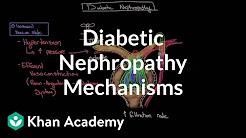 Diabetic nephropathy - Mechanisms   Endocrine system diseases   NCLEX-RN   Khan Academy
