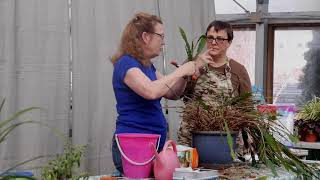 House Plant Rescue EP4 Rosemary Jade Taking Cuttings