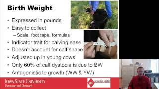 epd basics part 1 calving ease