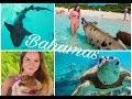 Mit Schweinen schwimmen und Haien tauchen !! Bahamas | Misses Tarec
