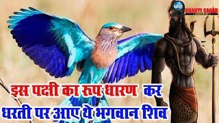 इस पक्षी का रूप लेकर भगवान शिव धरती पर करते हैं भ्रमण | Neelkanth – Lord Shiva Incarnate Holy Bird