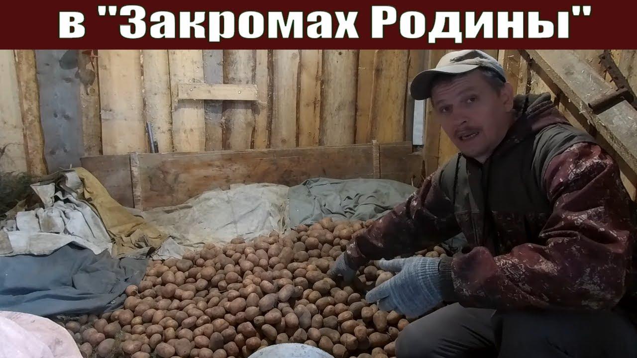 """Оказывается картофель теперь ВРЕДЕН!!!  Заполняем """"Закрома"""" из """"Урожайного огорода 2020"""""""