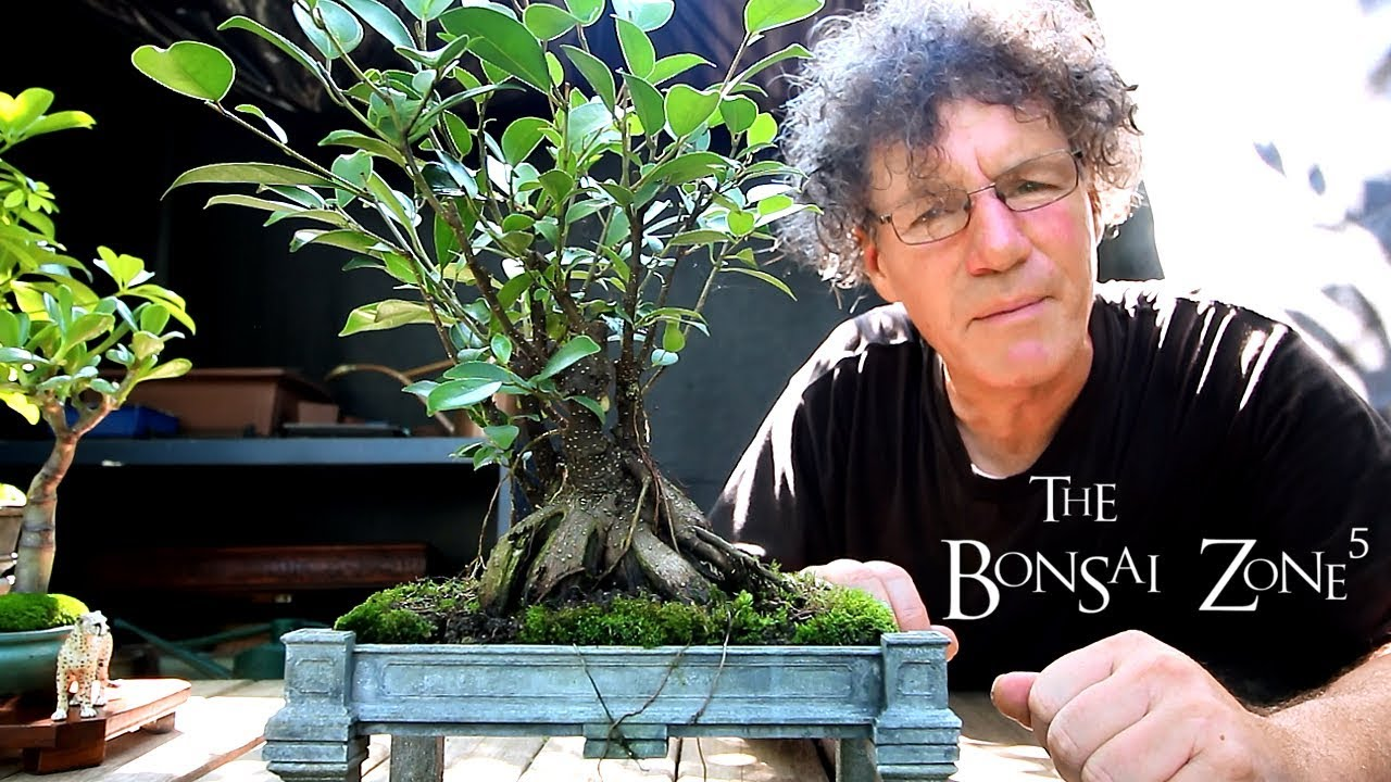 My Bonsai Show Tree Selection Part 5 Sept 2018 Youtube