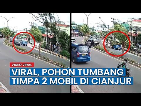 Detik-detik Pohon Tumbang Timpa Angkutan Umum Terekam CCTV