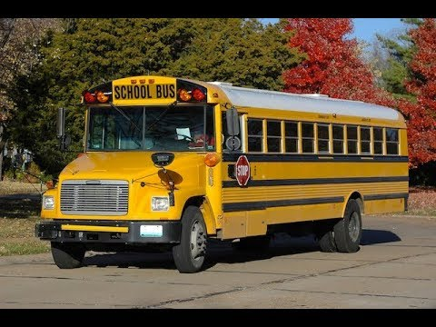 Why should school buses be yellow, and not black, white or green?
