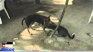 Смешные бои животных  Интересное видео