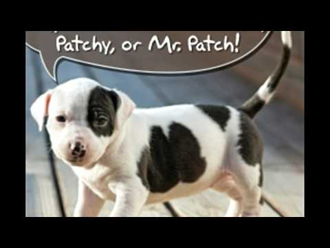 An A Z List of Names for Pit Bull Puppies You'll Want to Bookmark