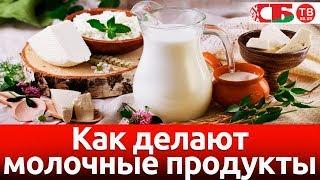 Как делают молочные продукты   Сделано в Беларуси