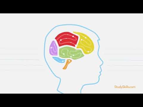 The Brain Circuit: How the Brain Works