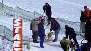 稚内空港公園で開催された、JAPAN CUP 全国犬ぞり稚内大会2012 3頭...