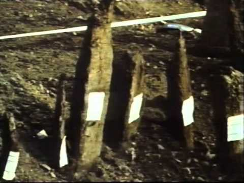 Excavations at Billingsgate Market (BIG82) 1982