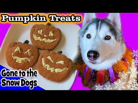 DIY Halloween Dog Treats Jack-o-Lantern | DIY Dog Treats | Snow Dogs Snacks 85