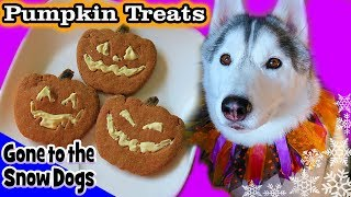 DIY Halloween Dog Treats Jack-o-Lantern | DIY Dog Treats | Snow Dogs Snacks 85