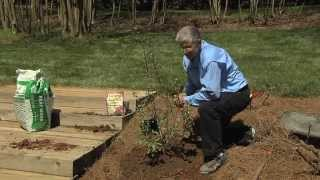 Walter Reeves – Planting and Growing Blueberry Bushes