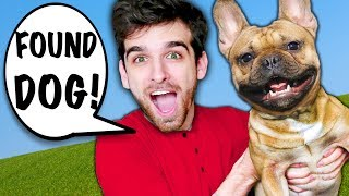 I RESCUE DOG from HACKERS in New York City! Spending 24 Hours on Surprising Travel Challenge!