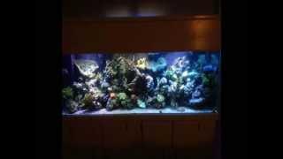 Aquarium Cabinet Design