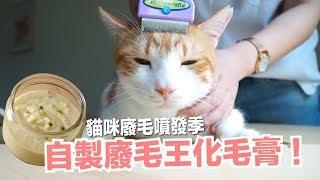 廢毛季來臨-自製純天然化毛膏-蛋捲竟然-貓副食食譜-好味貓鮮食廚房ep146