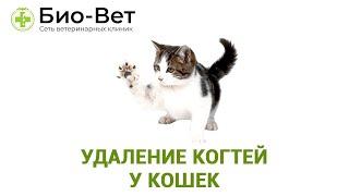 видео Удаление когтей у кошек, или операция
