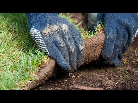 Installing a new lawn in winter - Lawn Solutions Australia