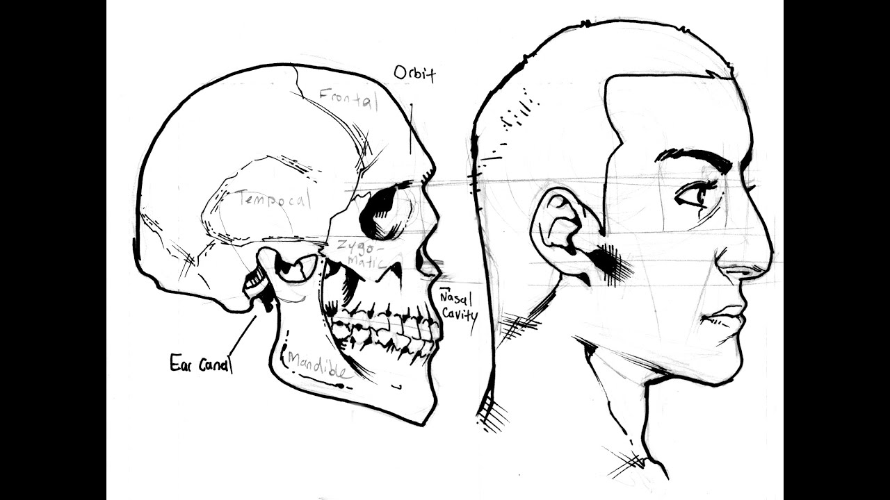 How To Draw Profiles (human Heads From The Side) Part 1