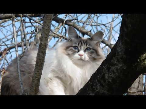 木に登るとは思わなかった・・・