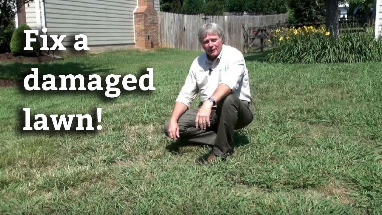 Lawn Renovation How To Grow Grass In A Damaged Lawn Youtube