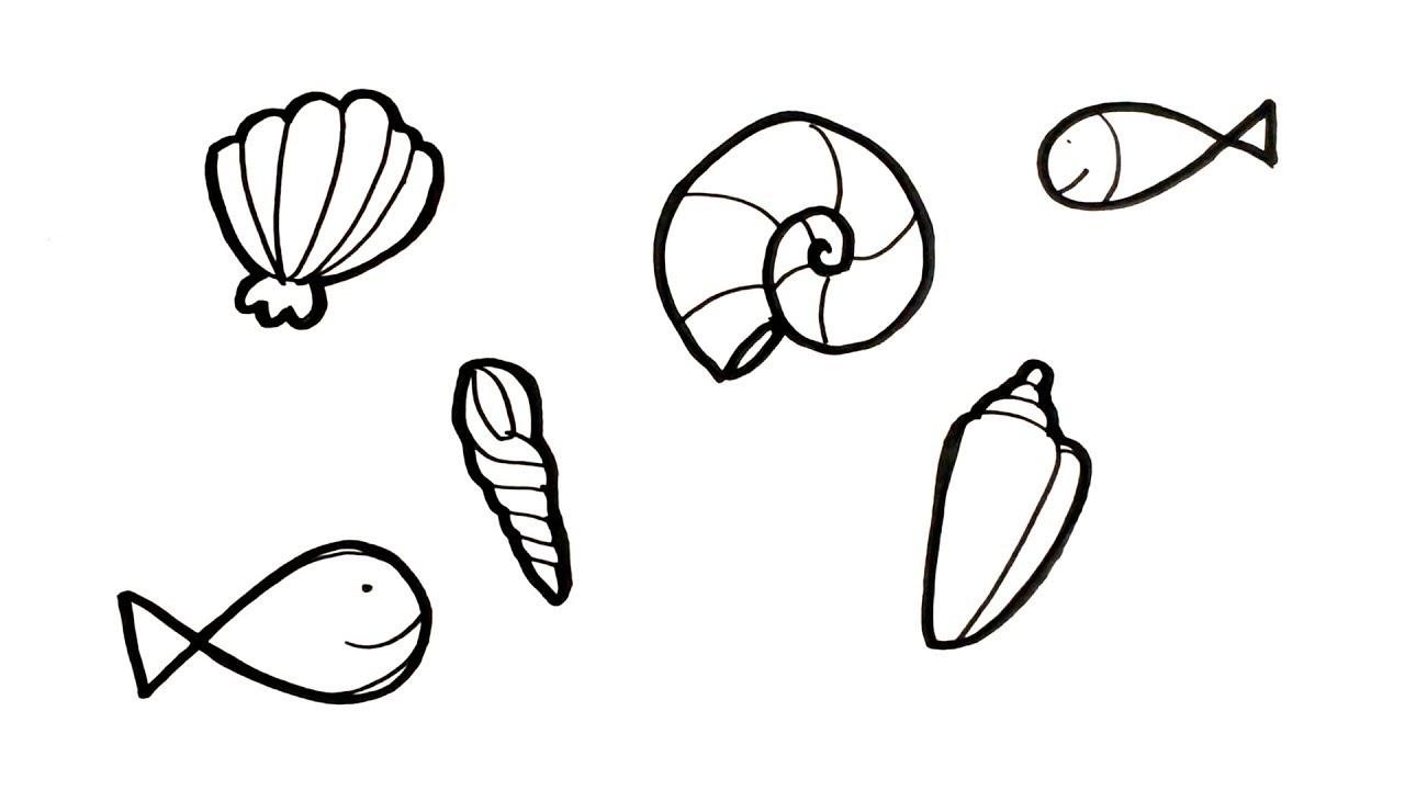 Menggambar Mewarnai Binatang Laut Kerang Untuk Anak Youtube