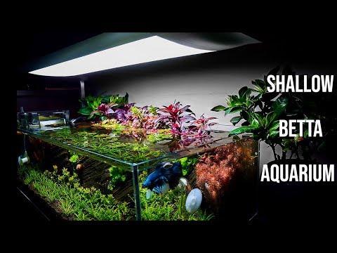 shallow-tank---nano-aquascape-for-betta-fish