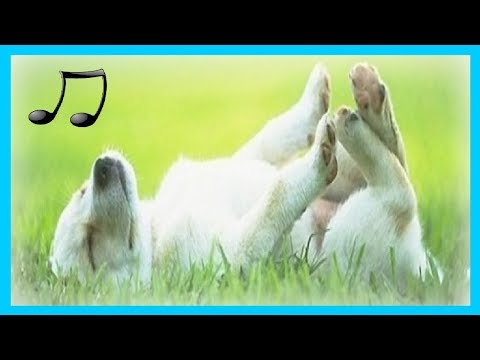 лучшая музыка для вашей собаки ваша собака спит улучшает беспокойство о разлуке 2018