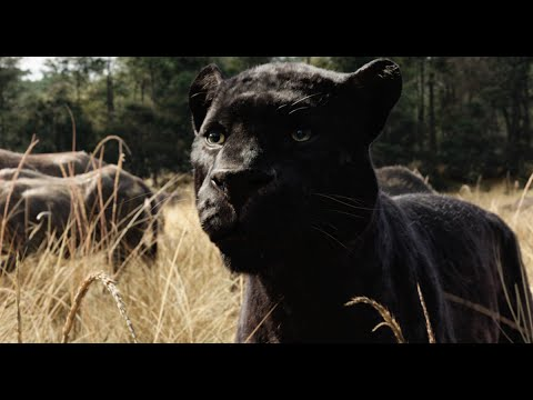 Il Libro della Giungla - Teaser Trailer Italiano Ufficiale | HD