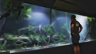 MIND BLOWN - 7500 gallon Asian Biotope Style Aquascape