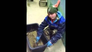 видео Профессия мастер строительных и отделочных работ