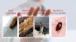 Pest Control St. Louis MO | Best Local Pest Control Exterminator St. Louis MO | St. Louis Pest