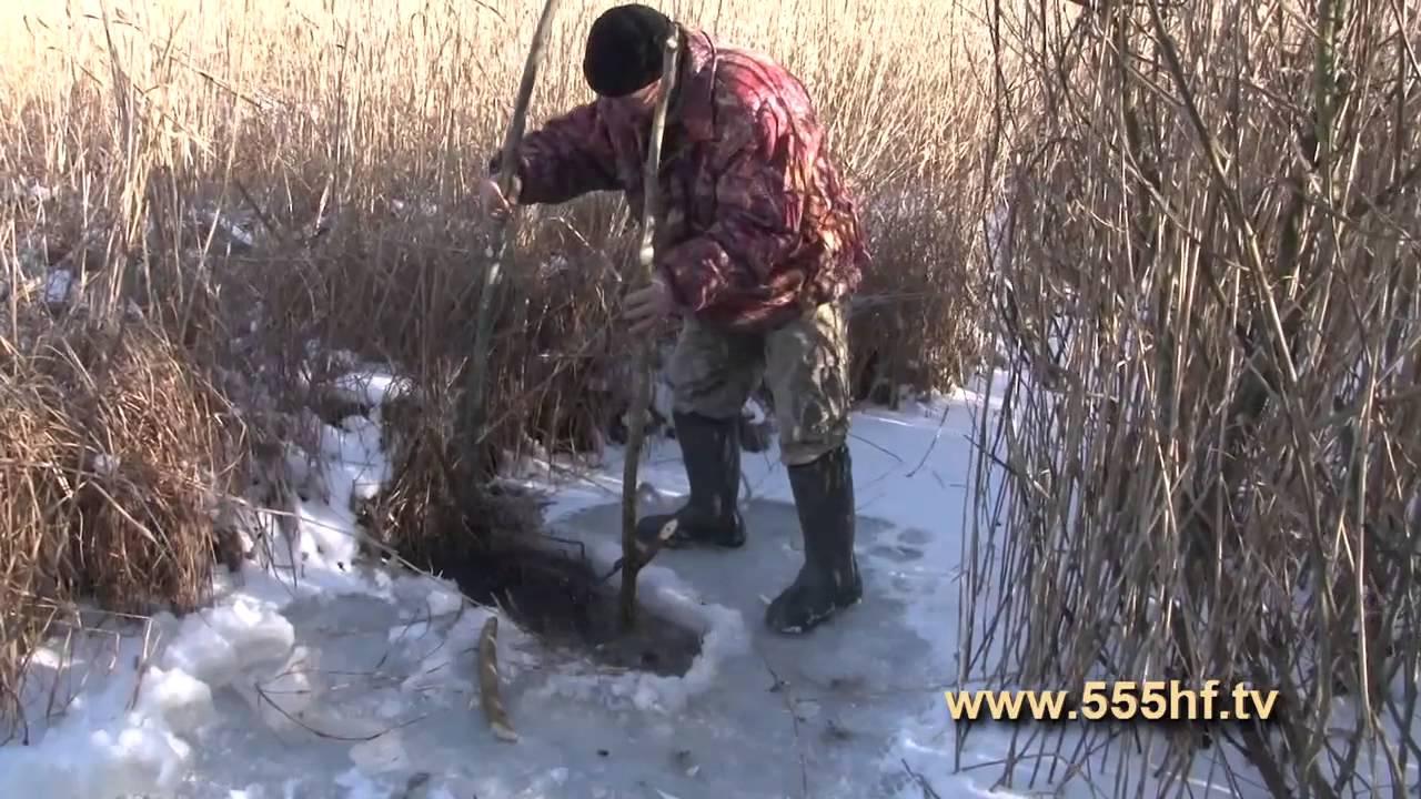 Клетки купить недорого в интернет-магазине товаров для грызунов unizoo с доставкой по москве, подмосковью и регионам россии.