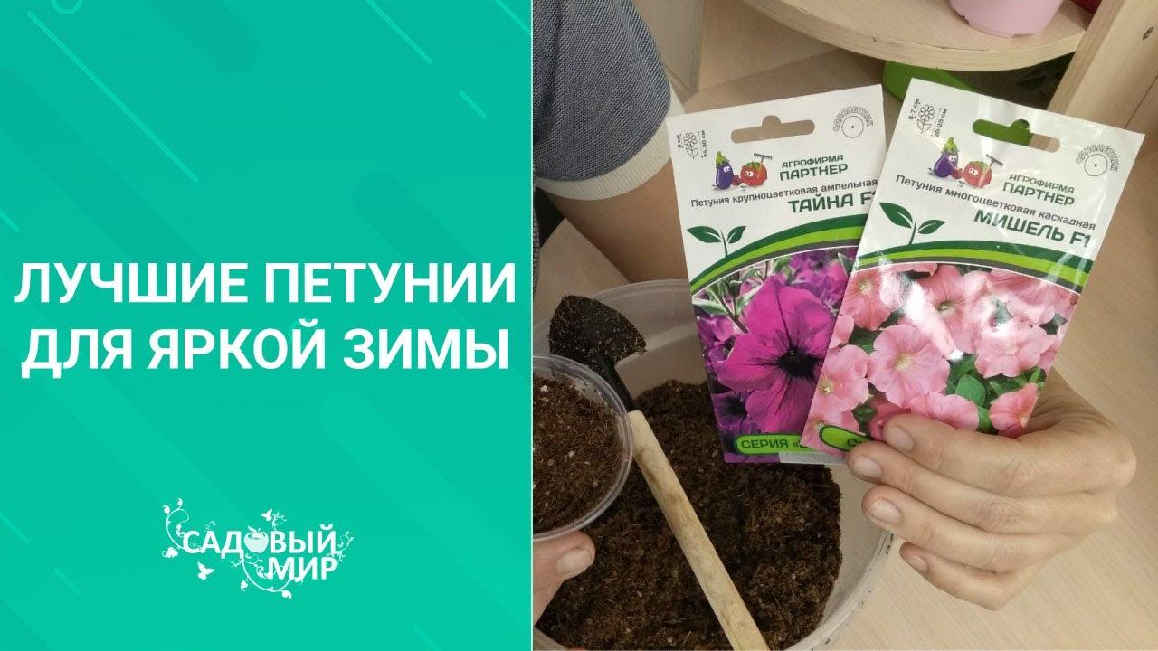 ПОСАДКА ПЕТУНИИ СЕМЕНАМИ без торфяных таблеток. Выращиваем без пикировки крепкую здоровую рассаду