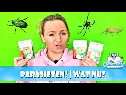 🐜 Parasieten bij knaagdieren   Wat wel en wat niet doen?