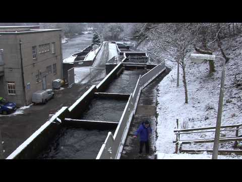 Fish Ladder Pitlochry