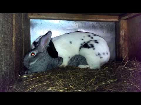 Песня про зайцев смотреть онлайн бесплатно — хорошее