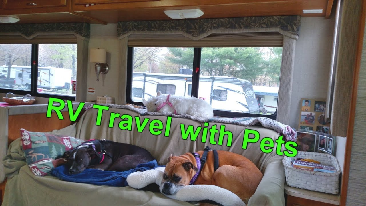 RV Travel with Pets - YouTube